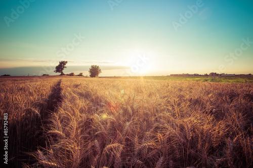 Valokuva  Paesaggio di campagna e campi di grano al tramonto