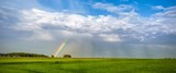Tęcza na polu pszenicy podczas letniego deszczu