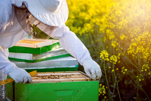 Photo Checking the hives