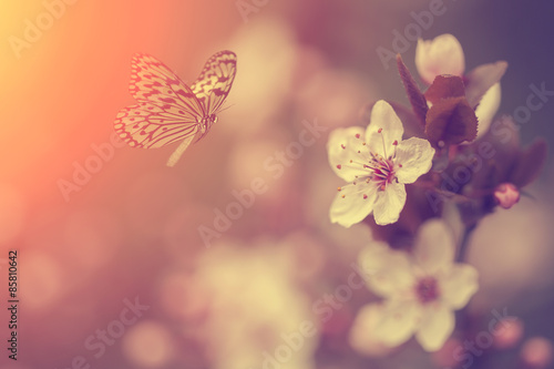 Fototapety, obrazy: Butterfly and flower