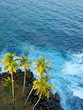 Palm trees at the ocean coast, top view. Sri-Lanka