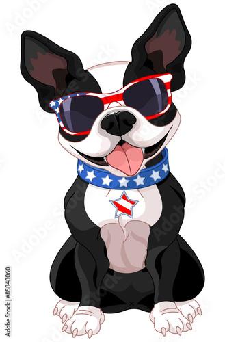 Foto op Plexiglas Art Studio 4th of July Boston Terrier