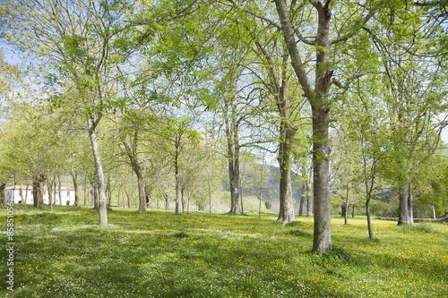 Spoed Foto op Canvas green landscape trees