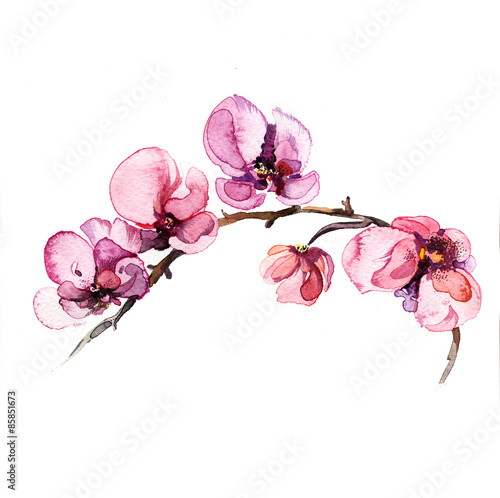 the watercolor flowers orchid isolated on the white background Wallpaper Mural