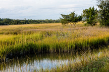 Stream Through Wetland Marsh