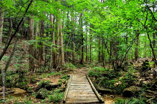 Foto op Plexiglas Japan 長野県 赤沢自然休養林 森林セラピー