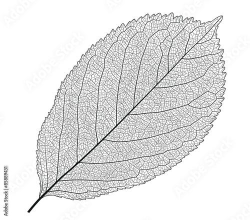 Obraz Leaf With Veins - fototapety do salonu