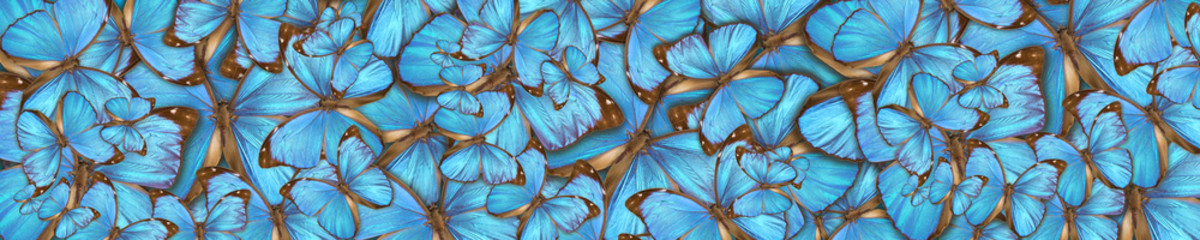 Fototapeta Motyle abstract background tropical butterflys Morpho menelaus