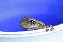 Frog On A Pot