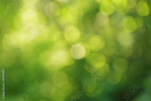 natural green summer bokeh background