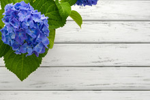 Blue Hydrangea Background