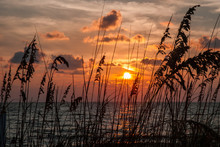Sea Oats At Sunset Along The Beach