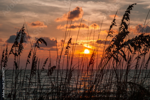 Photo Sea Oats at Sunset along the Beach