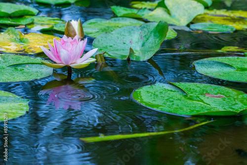 Deurstickers Waterlelies 睡蓮