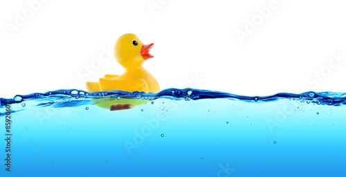 Vászonkép Rubber duck float in water