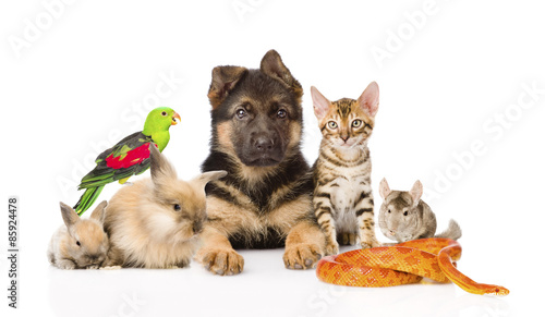 large group of pets along. Isolated on white background © Ermolaev Alexandr