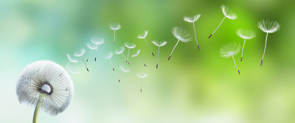 Obraz na Szkle Dmuchawce Pusteblume im Garten
