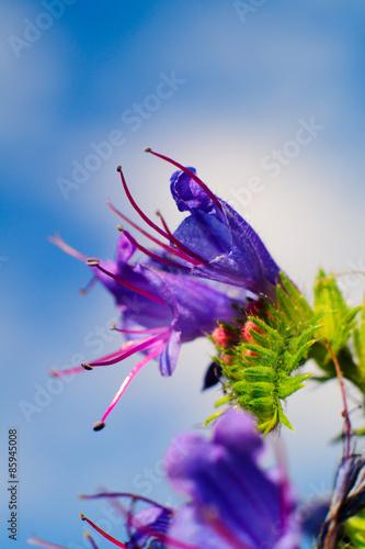 Fiore Viola Con Insetto Sfondo Verde Prato Sfondo Cielo Buy This