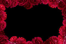 Frame With Bush Of Red Rose Flowers Background Isolated On Black