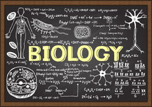 Hand Drawn Biology On Chalkboard.