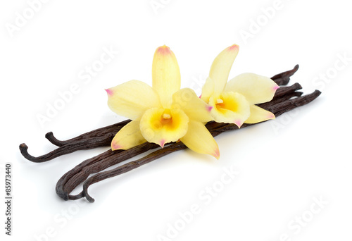 Fotografía  Vanilla pods with two yellow orchids.