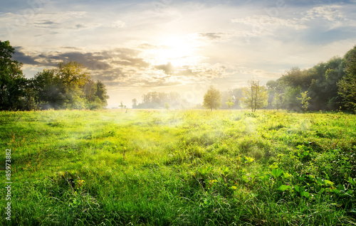 Foto op Plexiglas Weide, Moeras Green meadow at sunrise