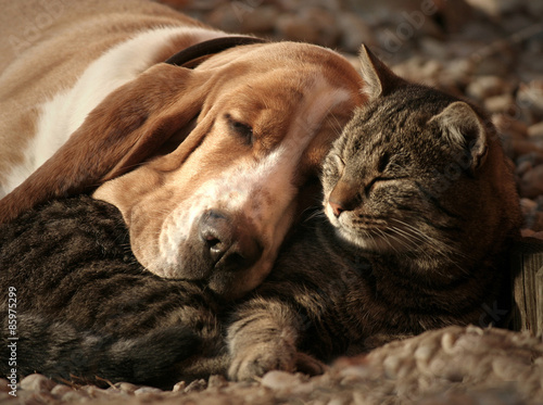 Cat pillow, dog blanket Tablou Canvas