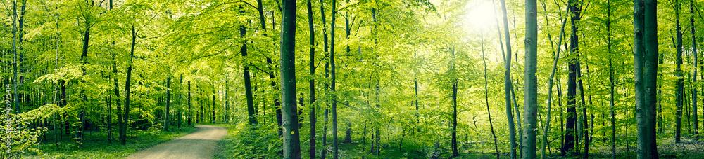 Fototapeta Green forest panorama landscape