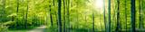 Fototapeta Las - Green forest panorama landscape