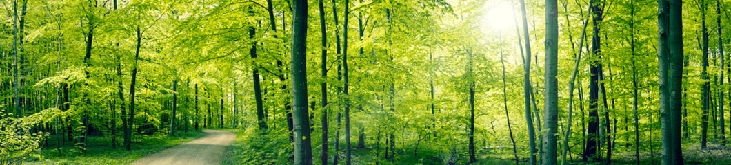 Green forest panorama lands...