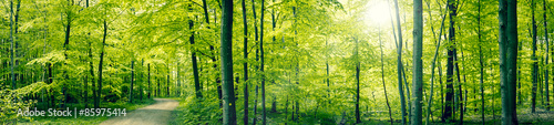 Foto op Canvas Pistache Green forest panorama landscape