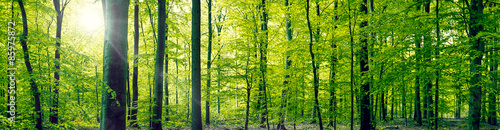 Canvas Prints Pistachio Beech forest panorama landscape