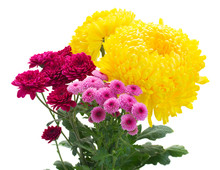 Yellow, Red And Pink  Mum Flow...