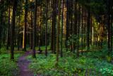 Droga przez leśny gaj