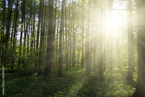Fotobehang Bossen green forest