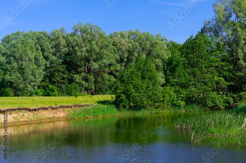 Fototapeta Coast of forest river obraz na płótnie