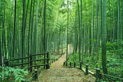 Fotografía  竹林の小道