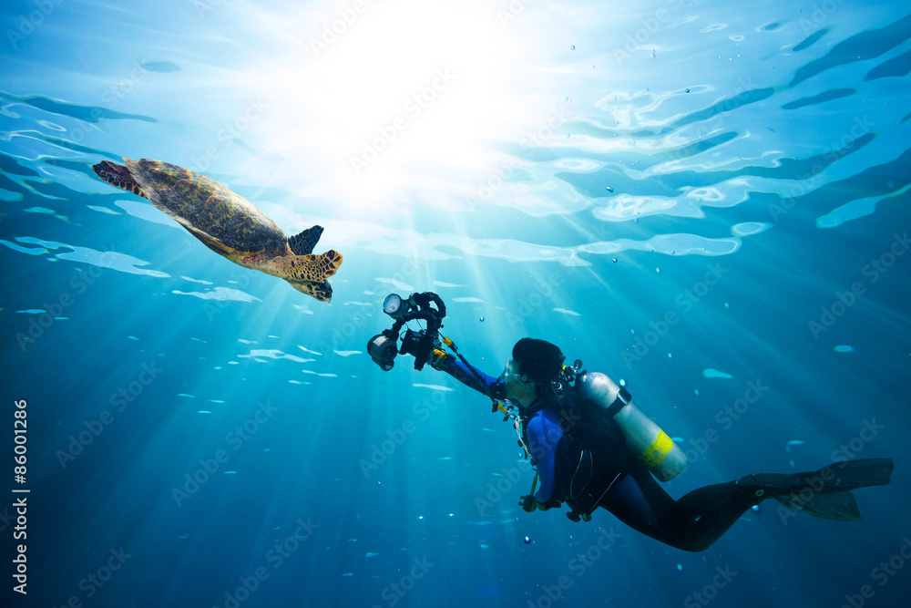 Fototapeta diver takes photo of sea turtle in the blue ocean