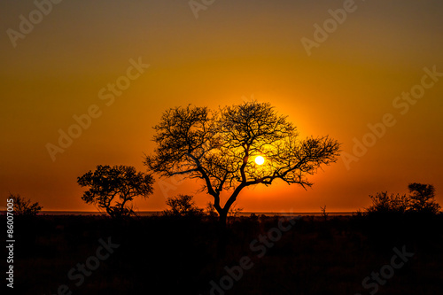 Poster Corail African sunset