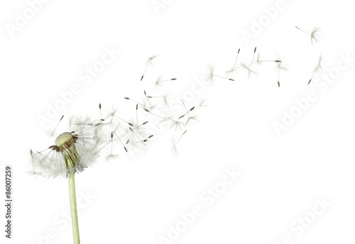 Dandelion, Wishing, Blowing.