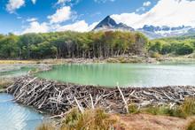 Beaver Dam At Tierra Del Fuego