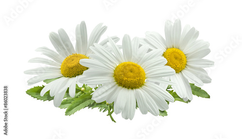 Foto op Canvas Madeliefjes 3 chamomile composition isolated on white background