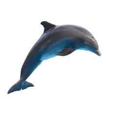 Fototapeta Delfin jumping dolphin on white