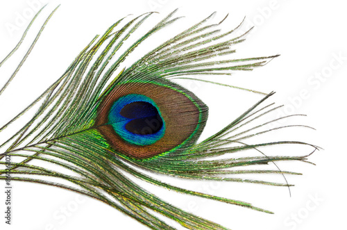 Foto op Plexiglas Pauw Peacock feather on a white background
