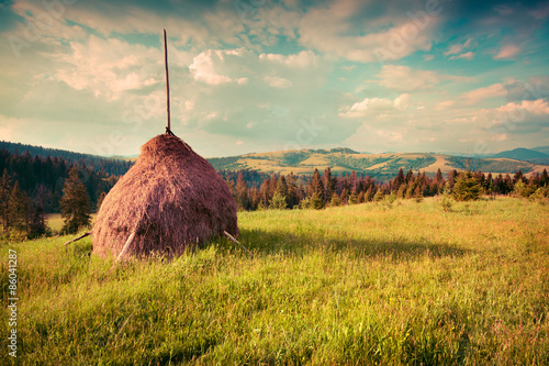 Fotografia, Obraz  Haymaking in a Carpathian village