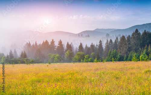 Wall Murals Melon Colorful summer morning in the foggy Carpathian mountains.