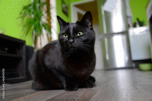Fotografía Portrait of black cat sitting on the floor at home