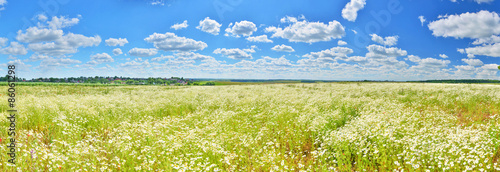 Photographie Chamomile field