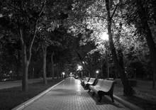 Night Park Black White