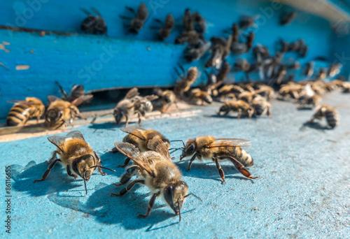 Aluminium Prints Bee Beehive